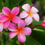Hawaiian Tropical Flowers 24 with Hawaiian Tropical Flowers