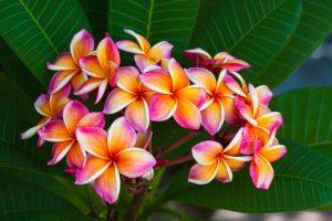 Hawaiian Tropical Flowers 26 with Hawaiian Tropical Flowers