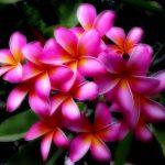 Hawaiian Tropical Flowers 58 with Hawaiian Tropical Flowers