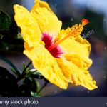 Hawaiian Tropical Flowers 71 with Hawaiian Tropical Flowers