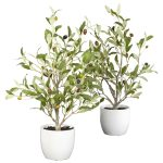 Luxury Olive Tree Plant 34 For Your Home Remodeling Ideas with Olive Tree Plant
