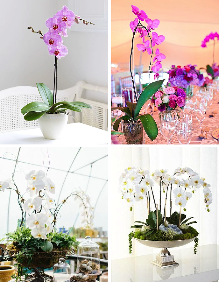 Orchid Centerpiece 56 with Orchid Centerpiece