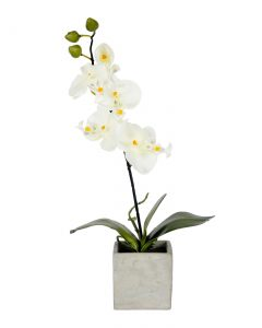 Orchid Flowers White 46 with Orchid Flowers White