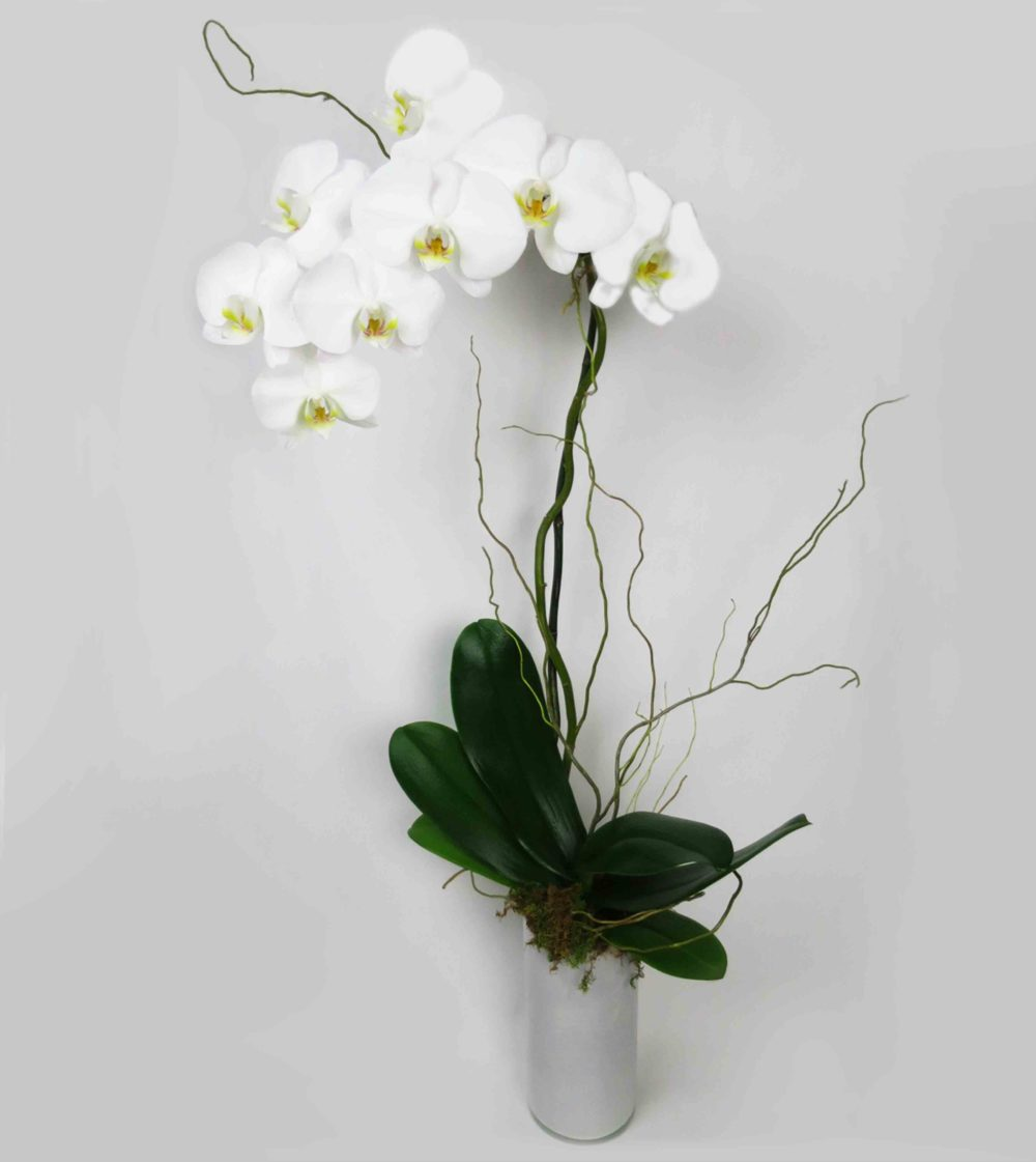 Orchid Flowers White 58 with Orchid Flowers White