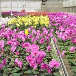 Orchid Nursery 18 with Orchid Nursery