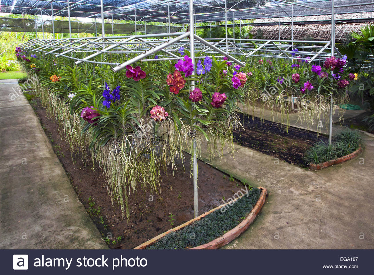 Orchid Nursery 20 with Orchid Nursery