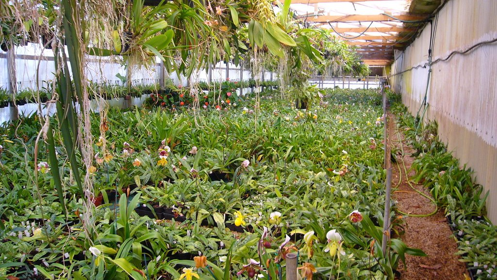 Orchid Nursery 34 with Orchid Nursery