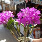 Orchid Nursery 50 with Orchid Nursery