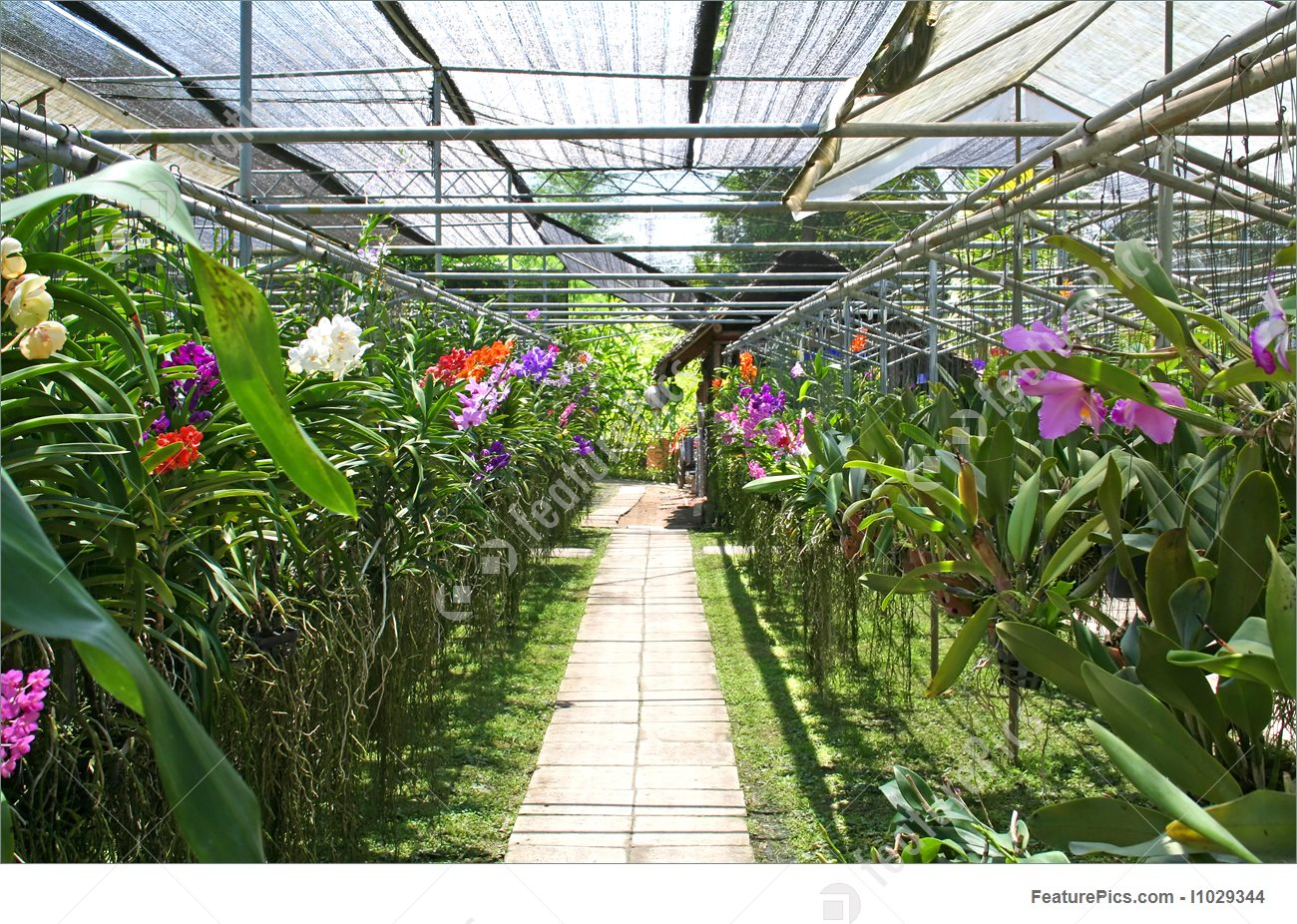 Orchid Nursery 53 with Orchid Nursery