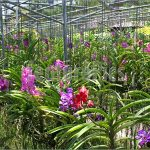 Orchid Nursery 61 with Orchid Nursery