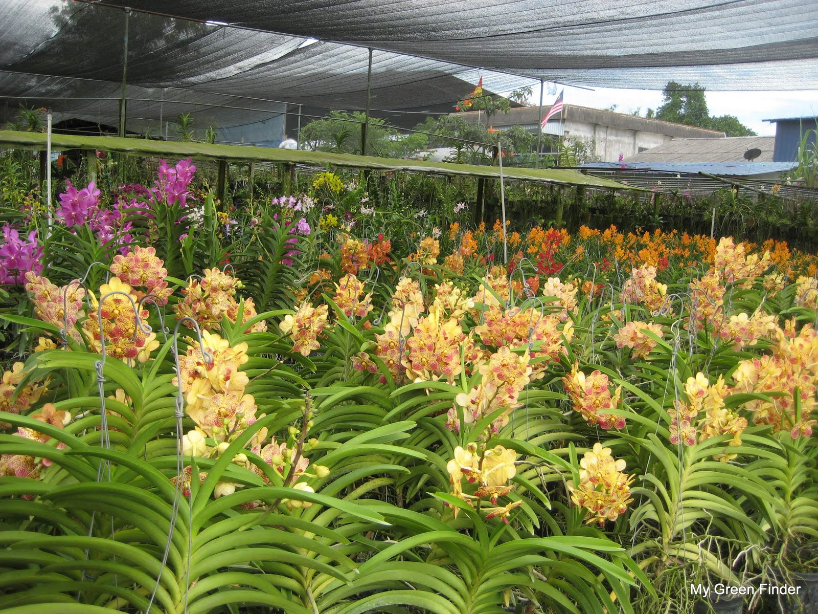 Orchid Nursery 88 with Orchid Nursery