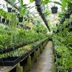Orchid Nursery 98 with Orchid Nursery