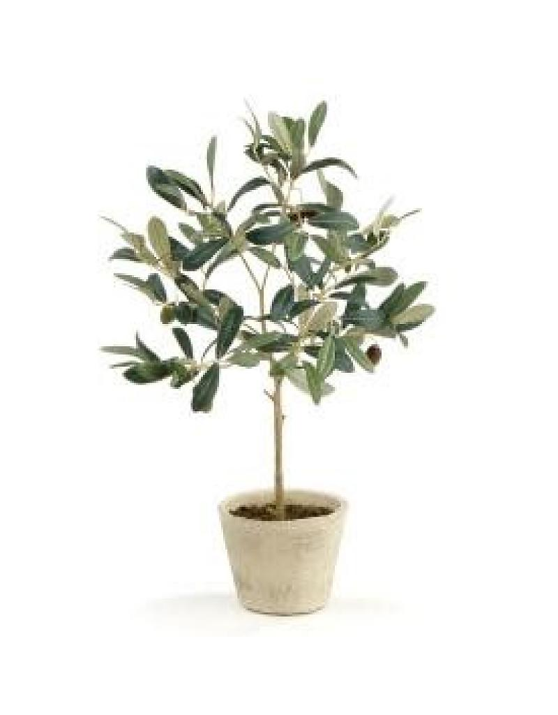 Perfect Olive Tree Plant 13 With Additional Furniture Home Design Ideas with Olive Tree Plant