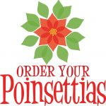Poinsettias For Sale 33 with Poinsettias For Sale