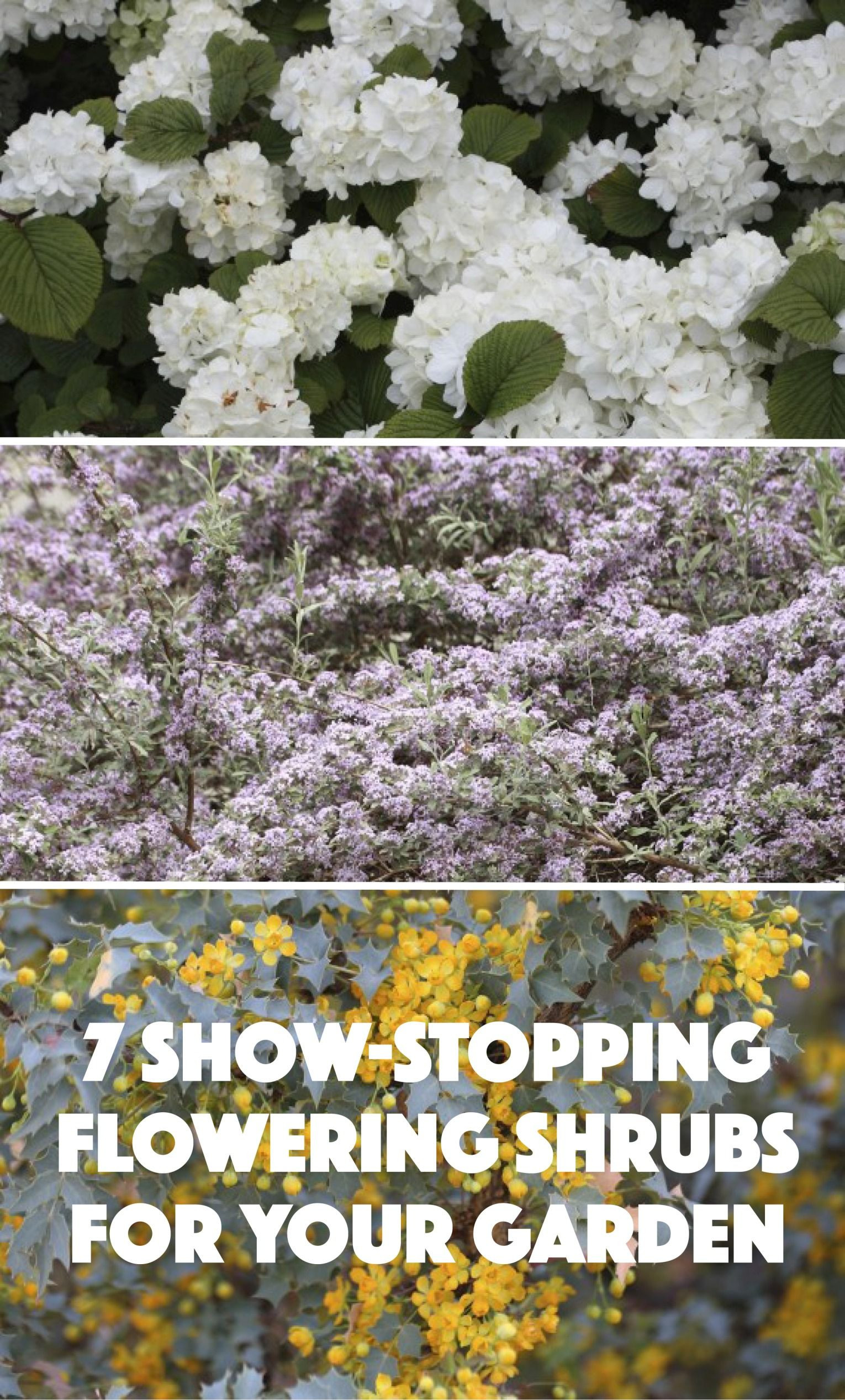 7 Show Stopping Flowering Shrubs for Your Garden