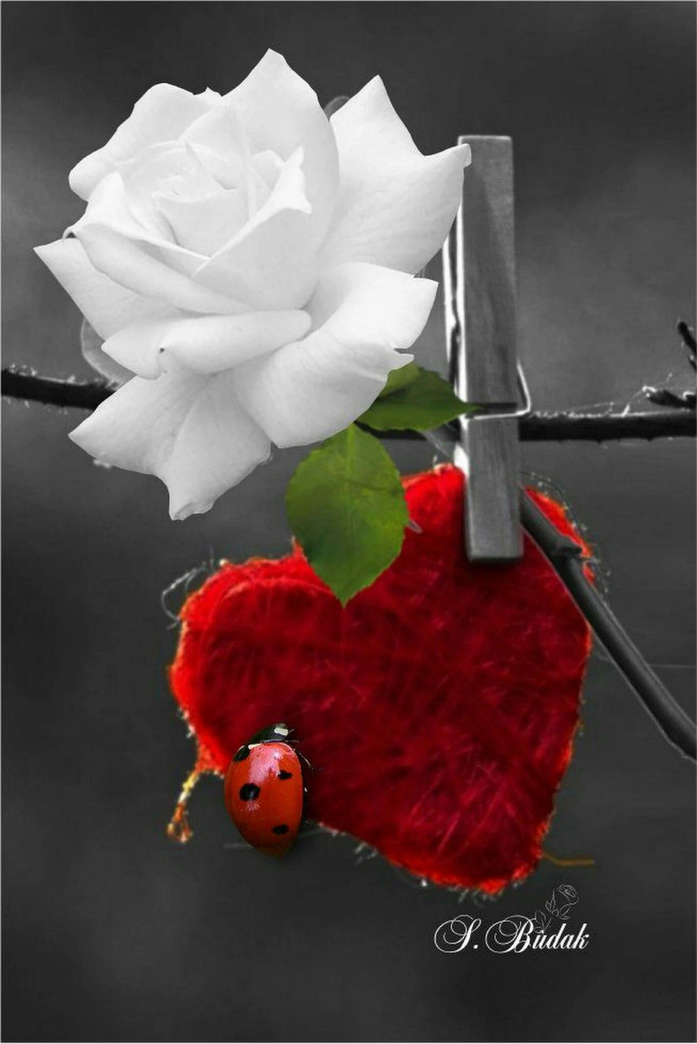 Pin by 💐💎Touch Fashion💎💐 on Color Splash Sabri Budak Pinterest