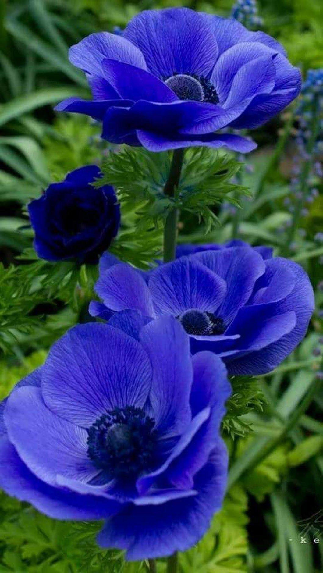Wonderful flowers · Фотография