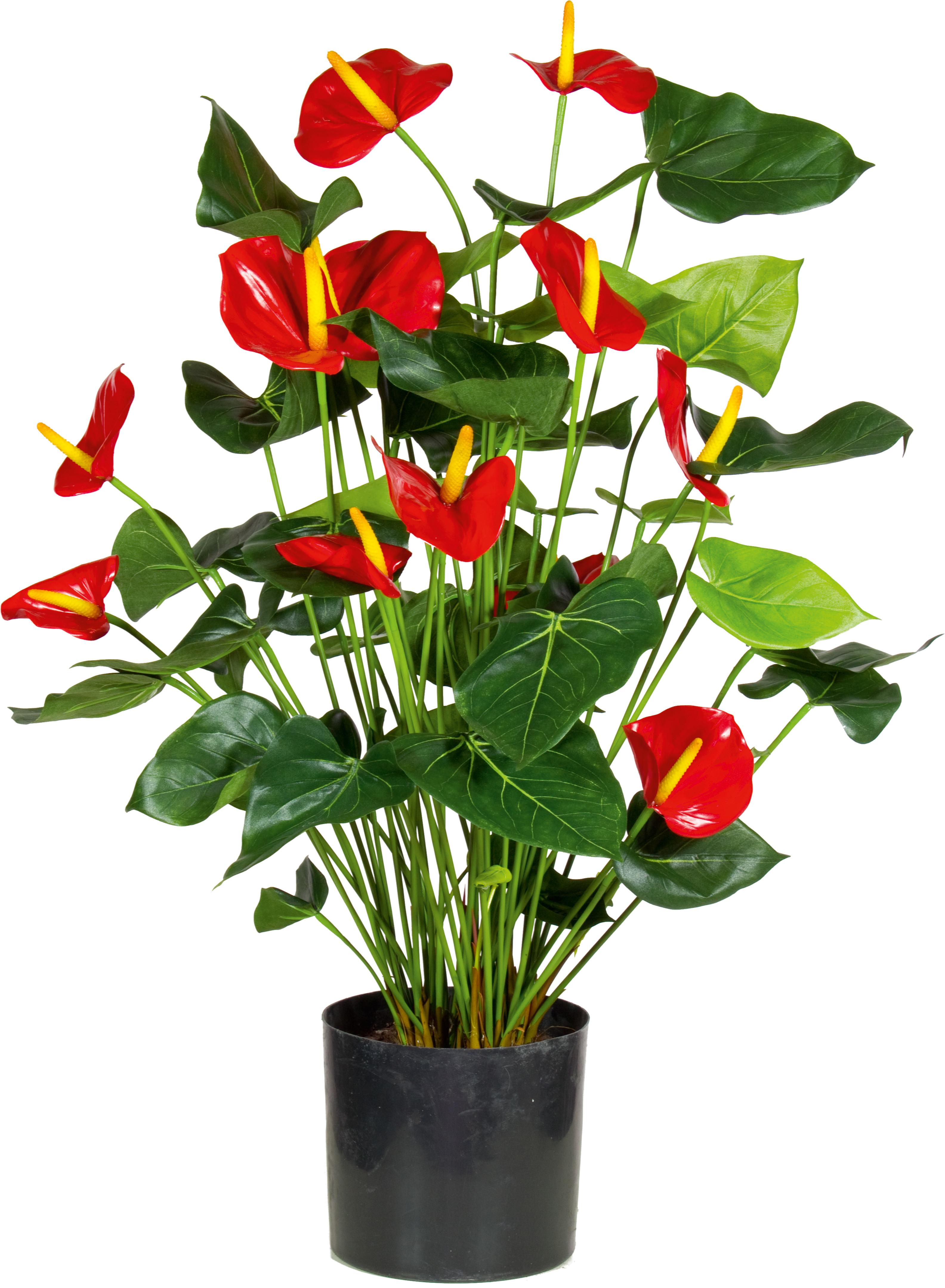 ANTHURIE Kunstpflanze 80 cm Pflanzen Pflanzenbehälter Accessoires Katalog