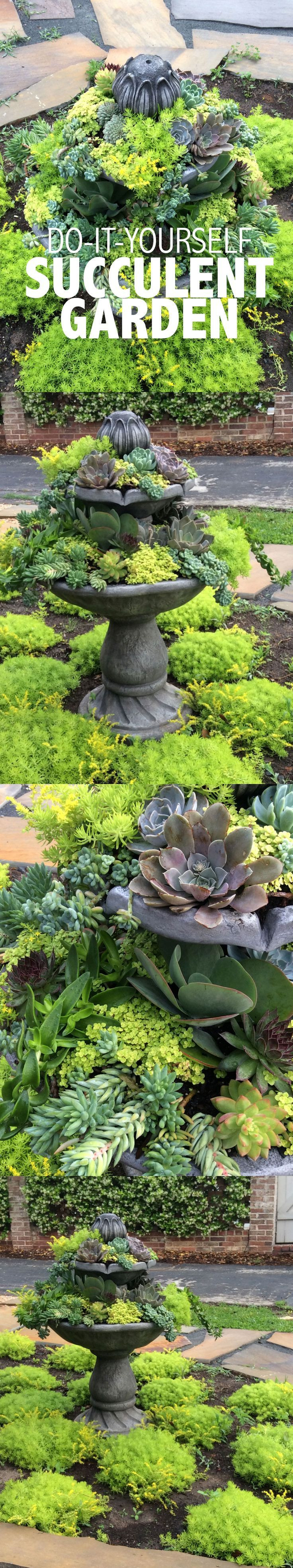 DIY Succulent Garden Normally I m not much of a fan of succulents