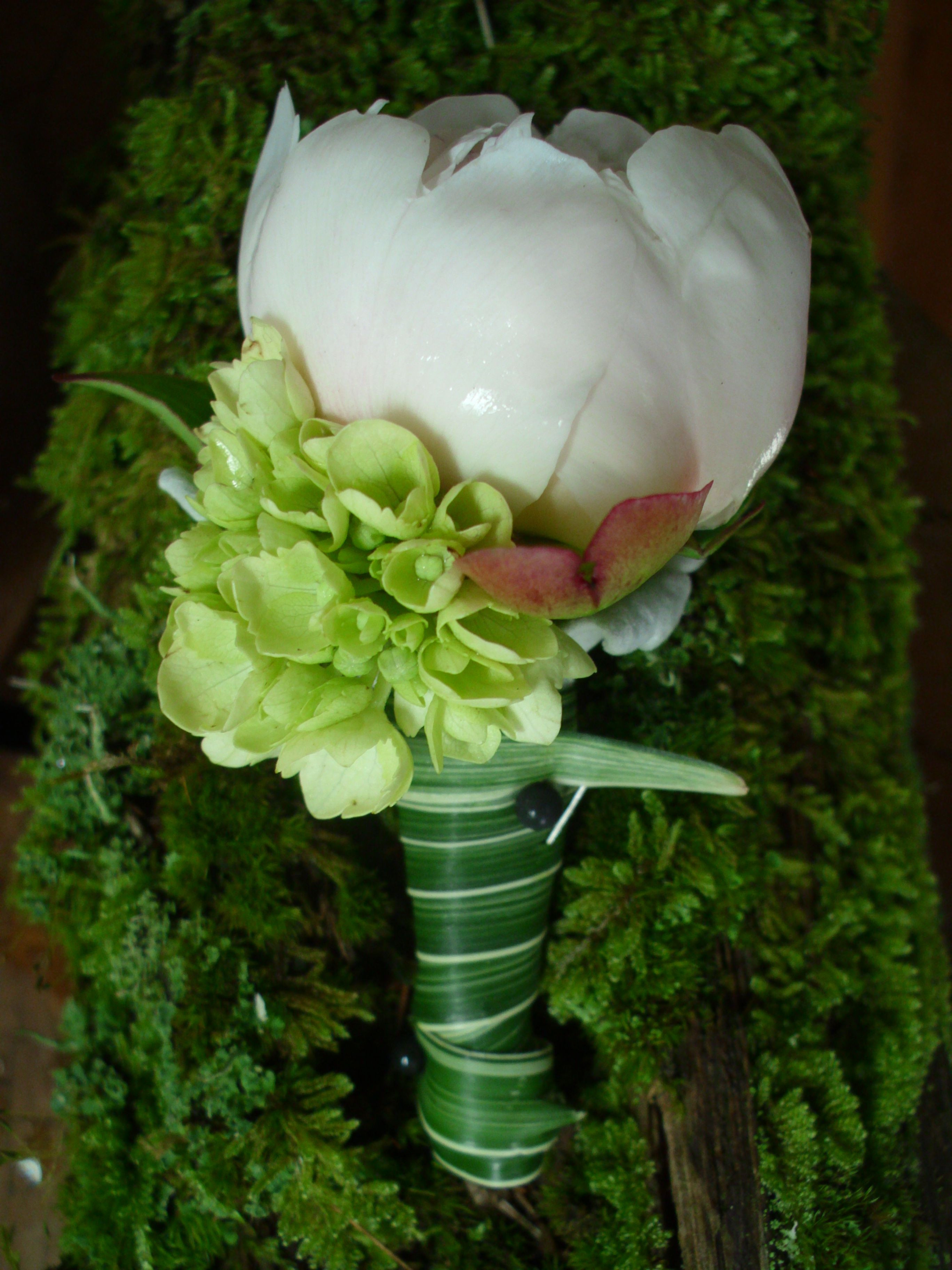 light pink peony boutonniere with green hydrangea accent wrapped in a variegated bear grass