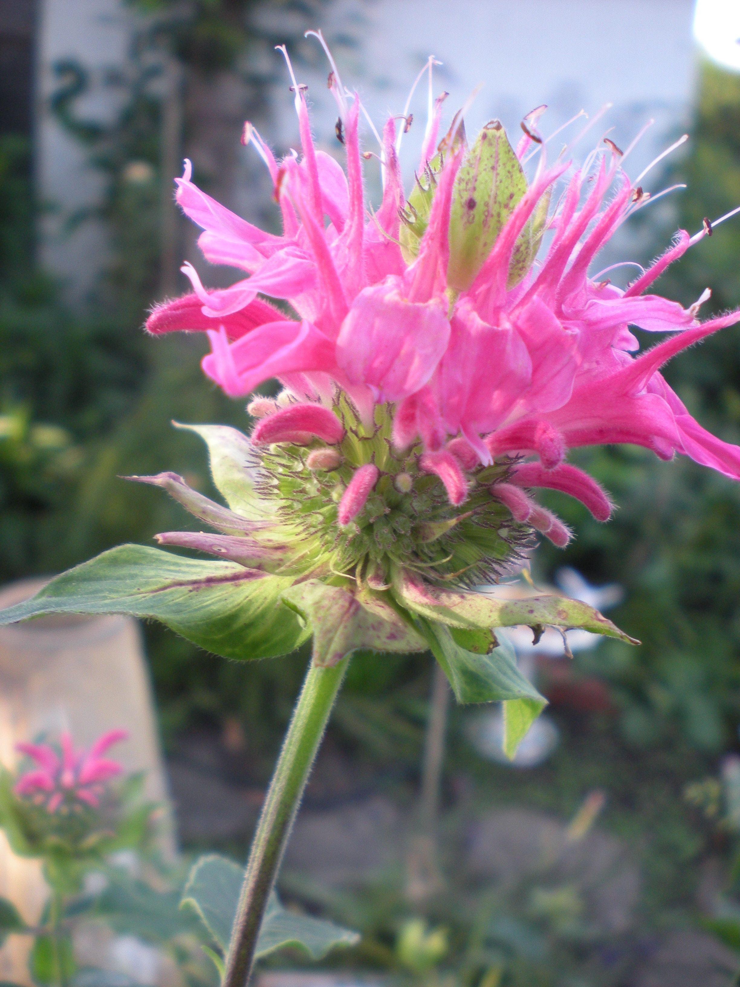 my favorite flowers e balms 2012