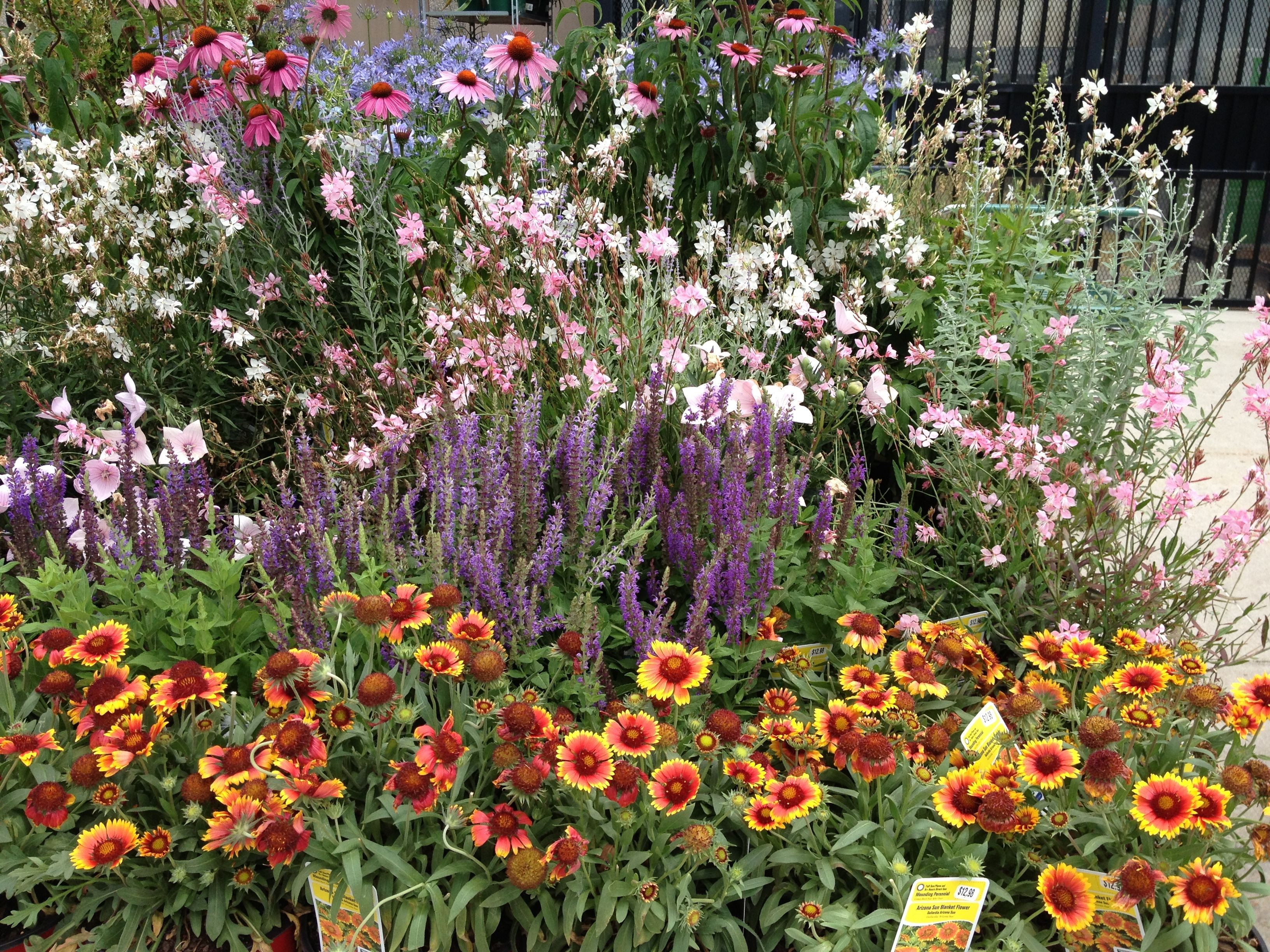 Inspiration Front to Back Blanket Flower orange Salvia Purple Pink Guara White Guara Pink Coneflower Blue flower in back don t know name