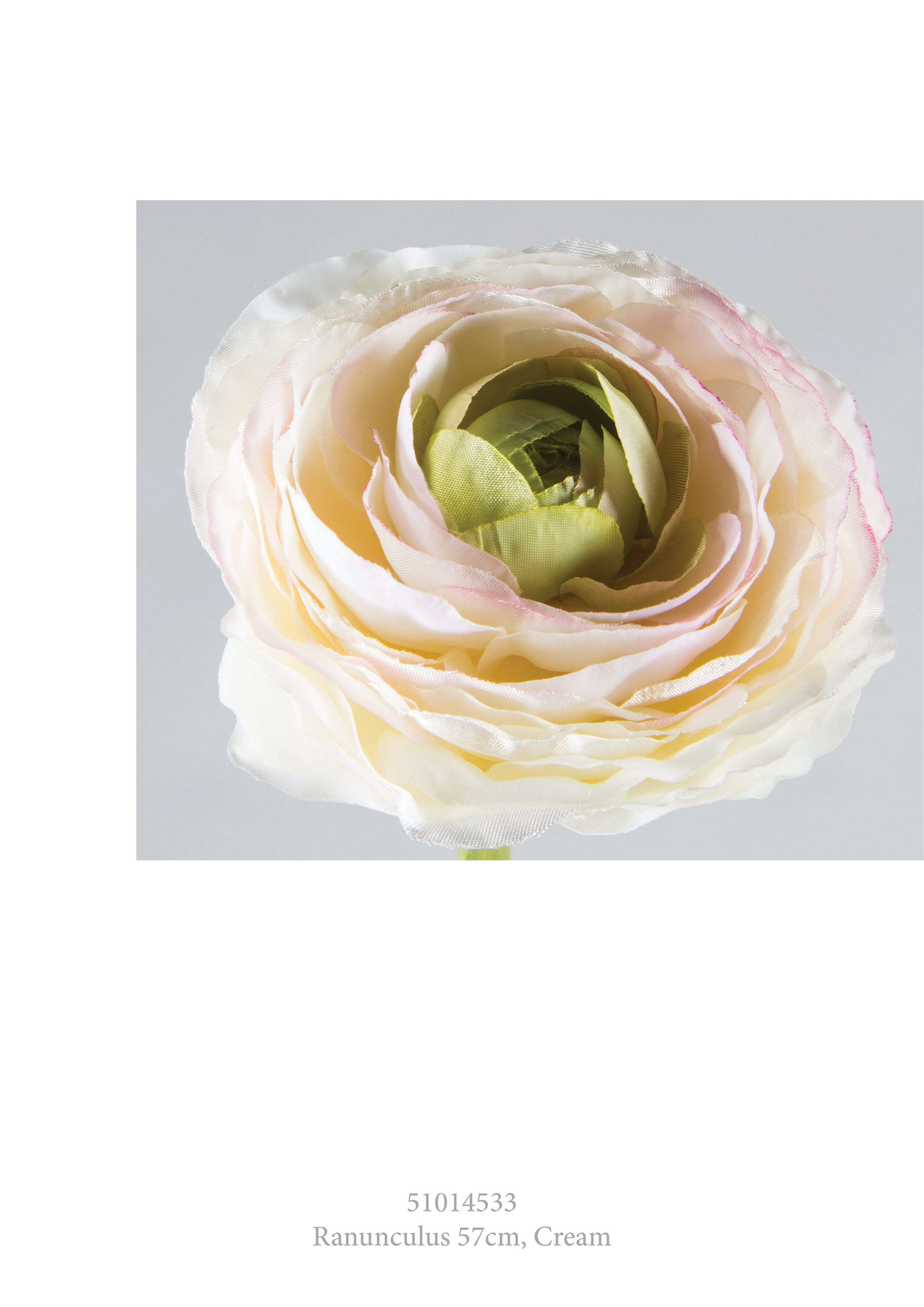 Ranunculus Cream ranunculus silkflowers materflora