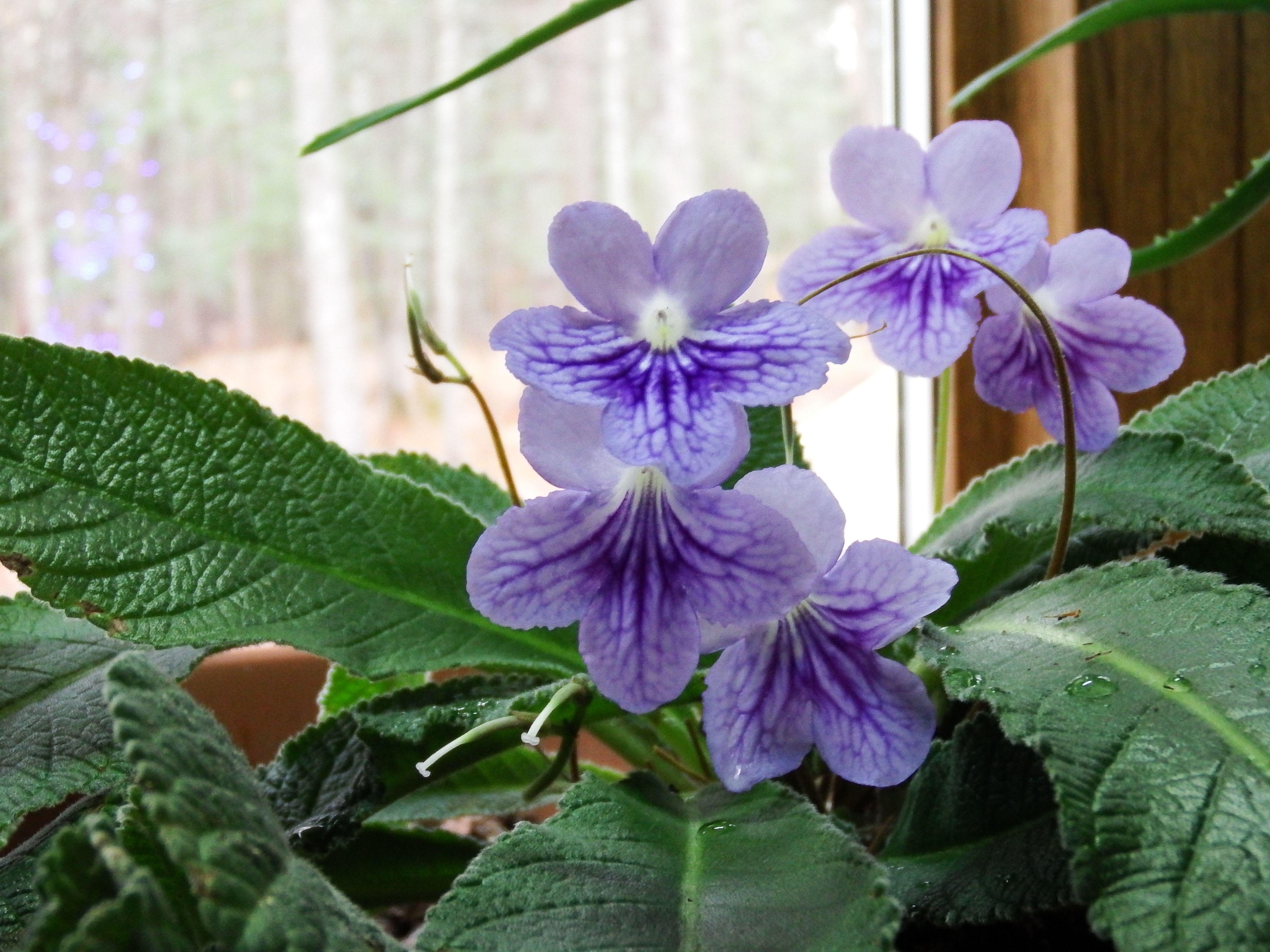 My garden window where I am visited by a spirit