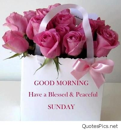 carnation flowers good morning flowers for sunday – Beautiful Flower