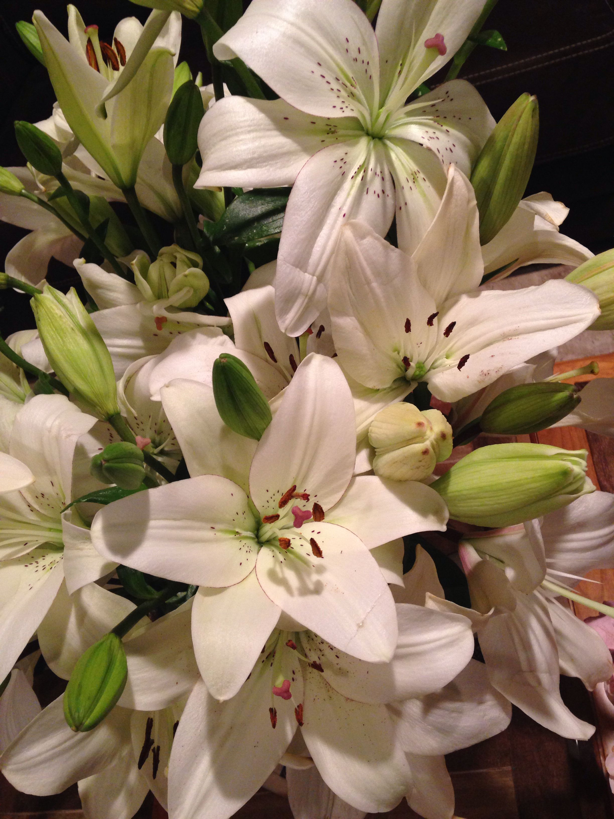 Flor Casa Blanca