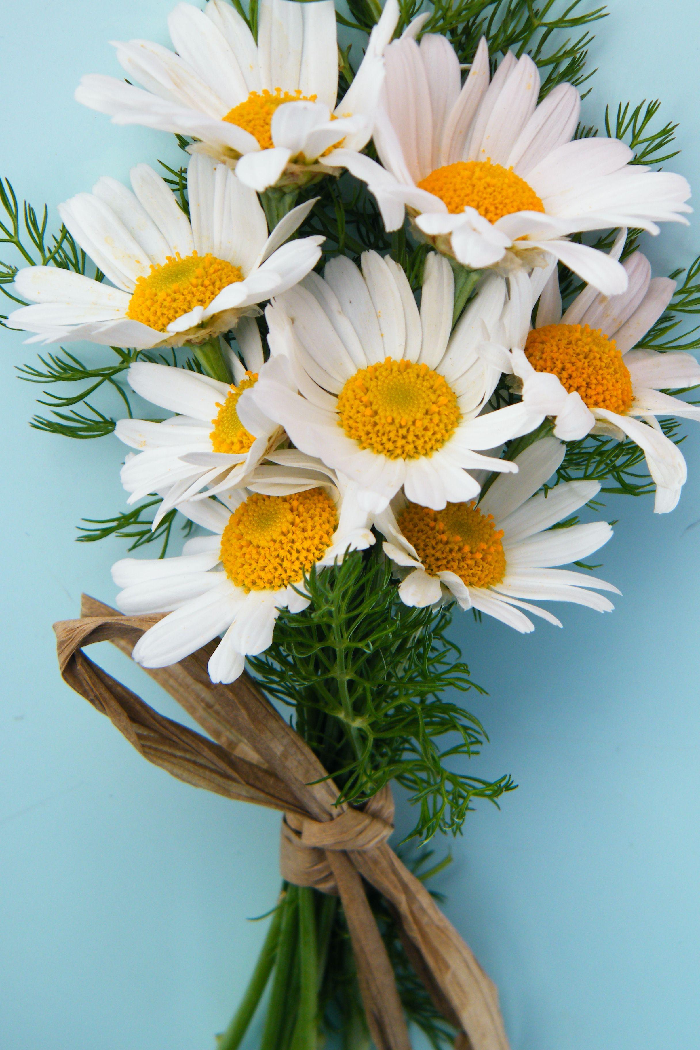 Small Bunch Daisies Waltz the Flowers Pinterest Design Daisy Flower Bouquet 35