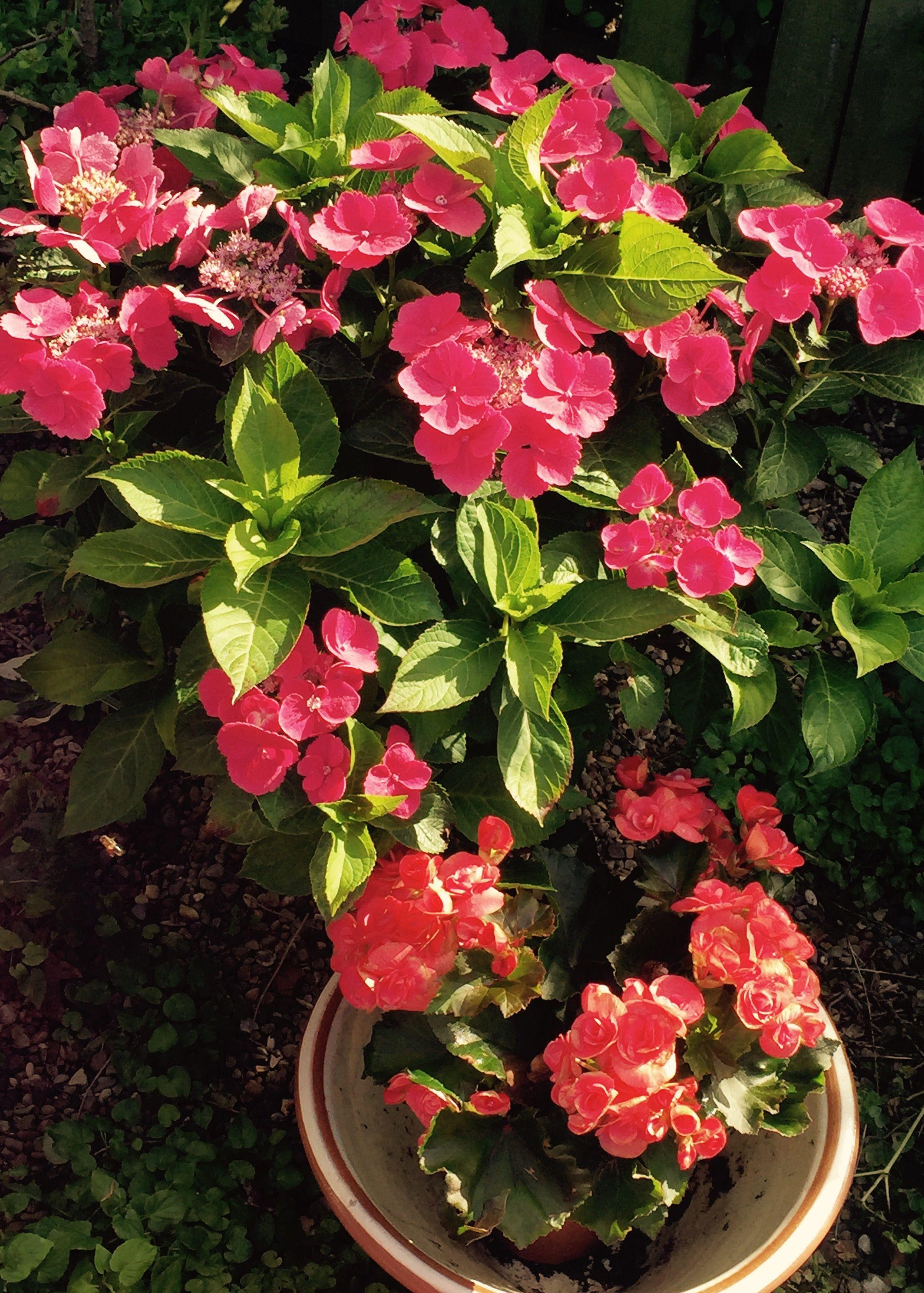 Did you say seventeen varieties of Coneflowers Keeping Calm & Loving Summer Pinterest