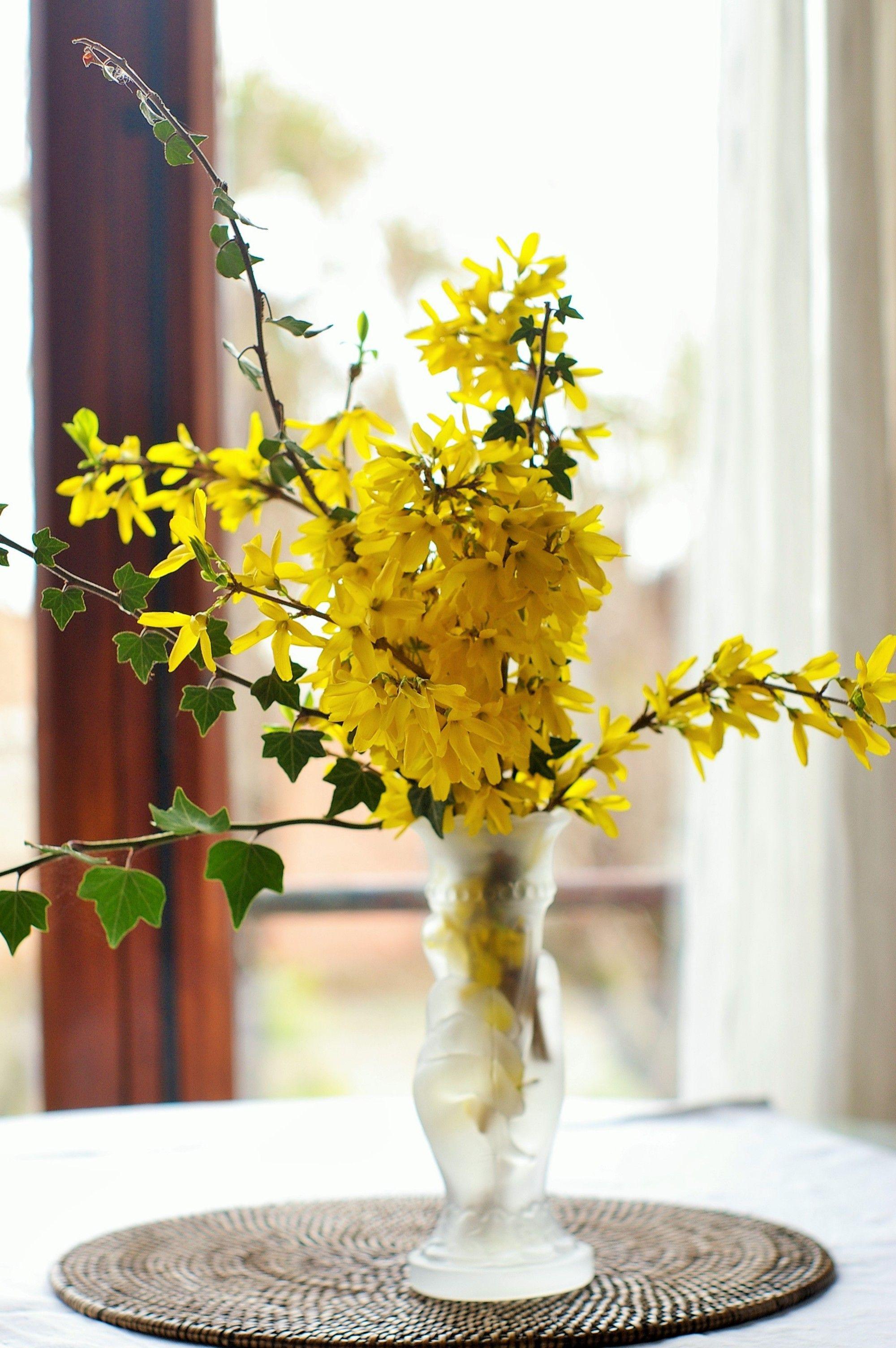 Flowers · Manu Torras Forsythia