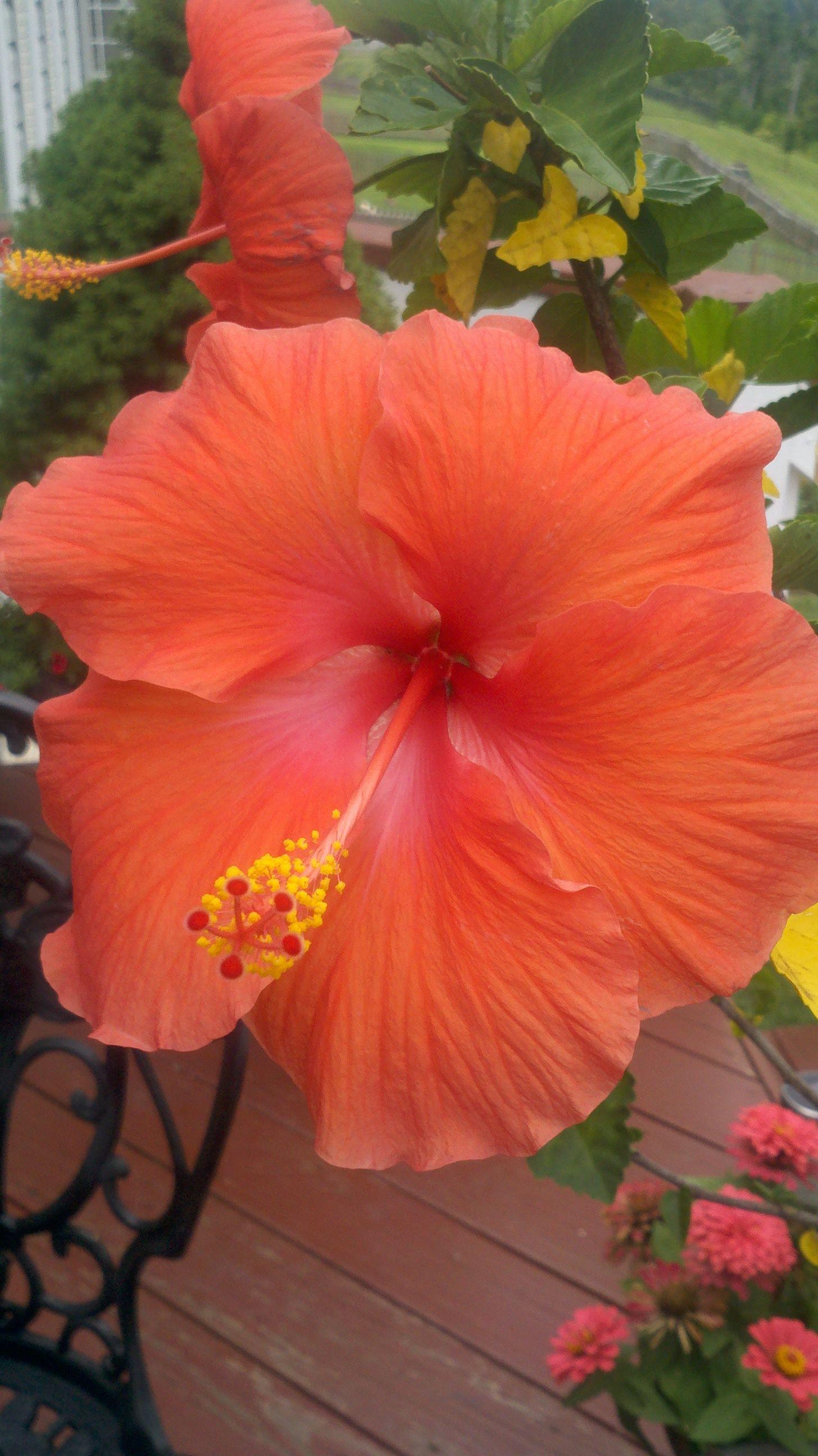 Beautiful Flowers Pretty Flowers