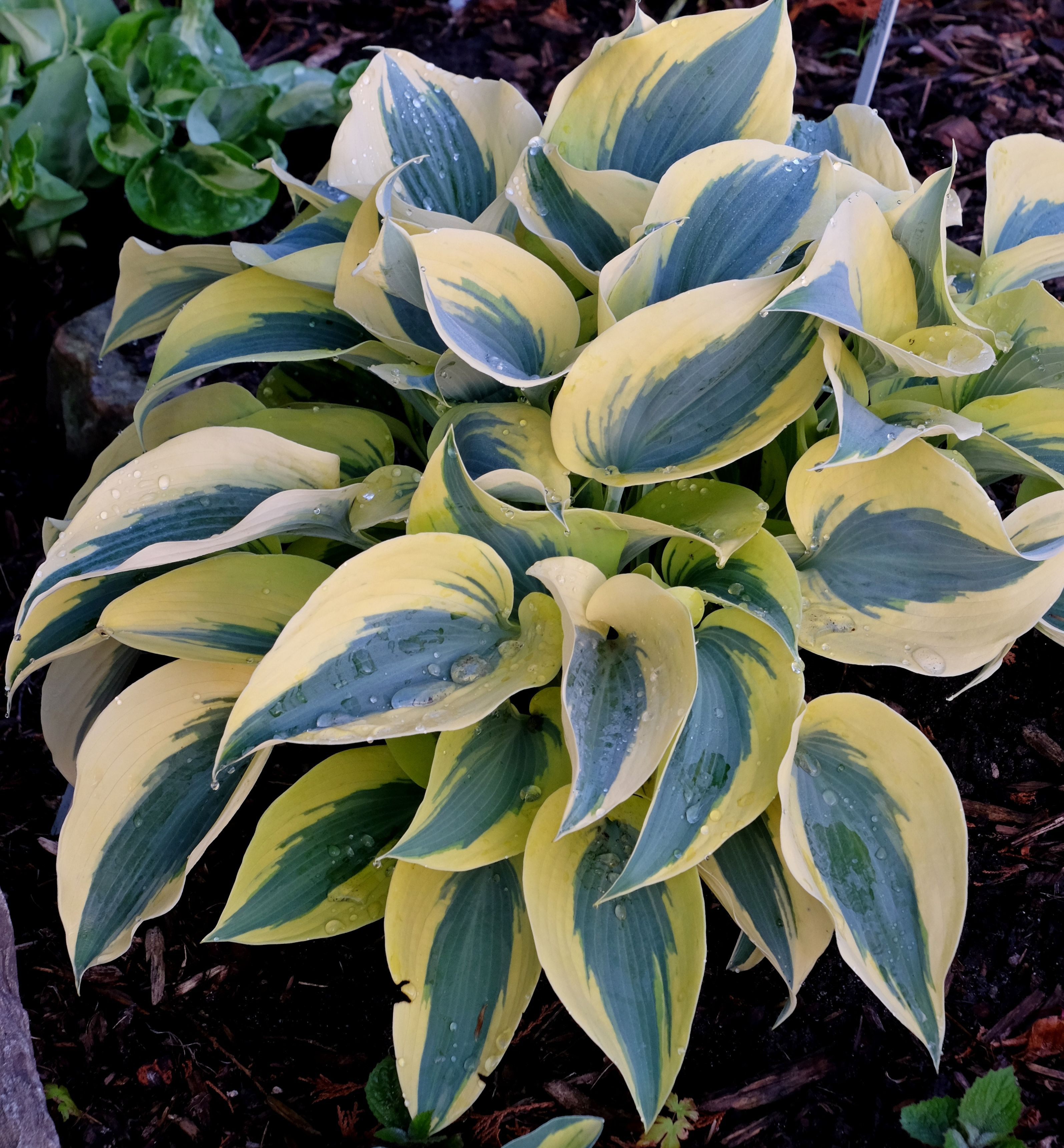 Spring Plant Sale and Open House