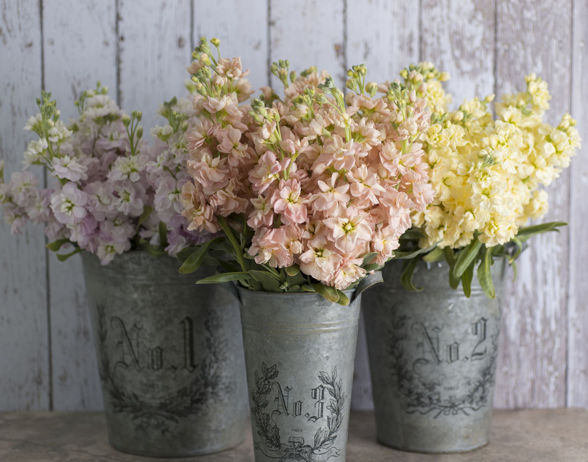 scentedstockflowers 584ae4003df78c491e0b09bf