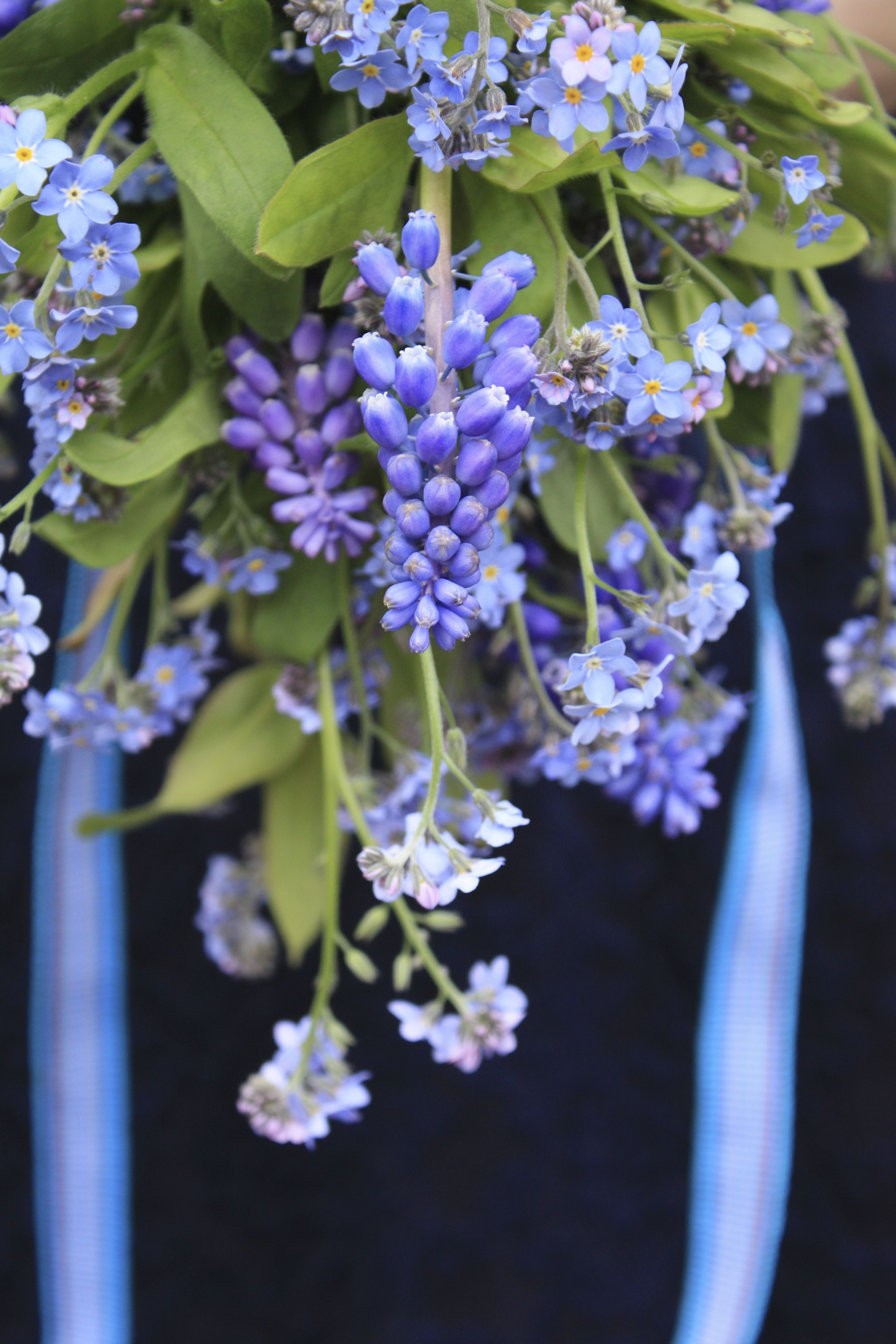 Muscari & for me nots