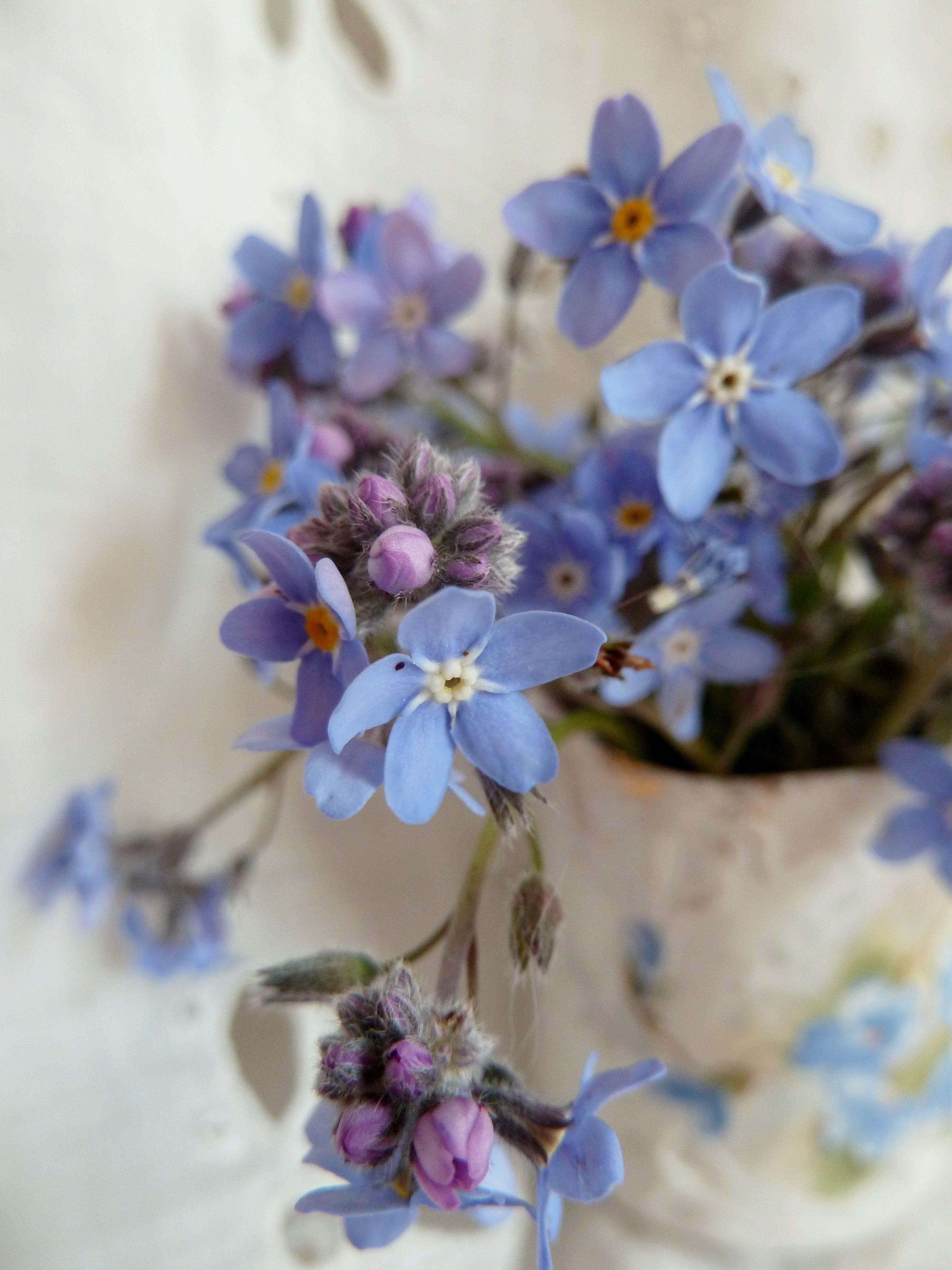 Bouquet de myosotis sylvatica Woodland For me not