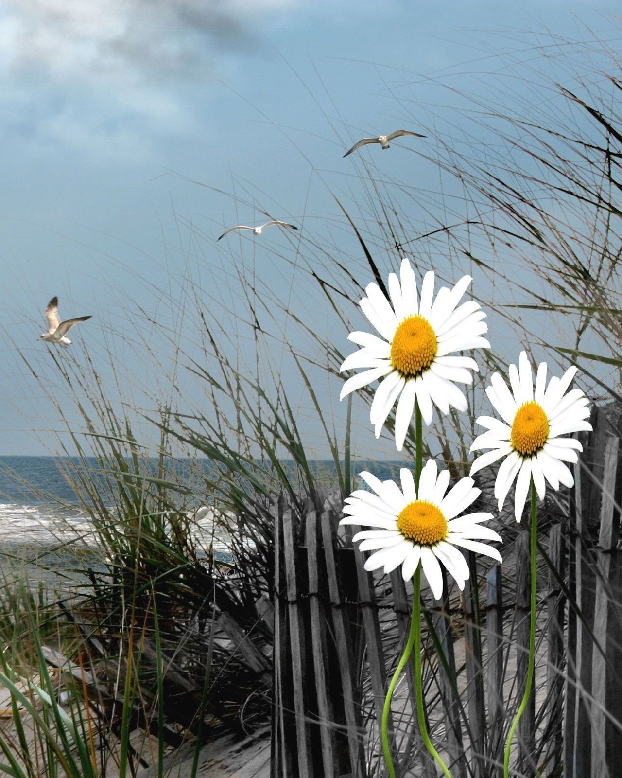 Daisy Flower Wall Art Seascape Beach Bathroom Bedroom Decor Picture