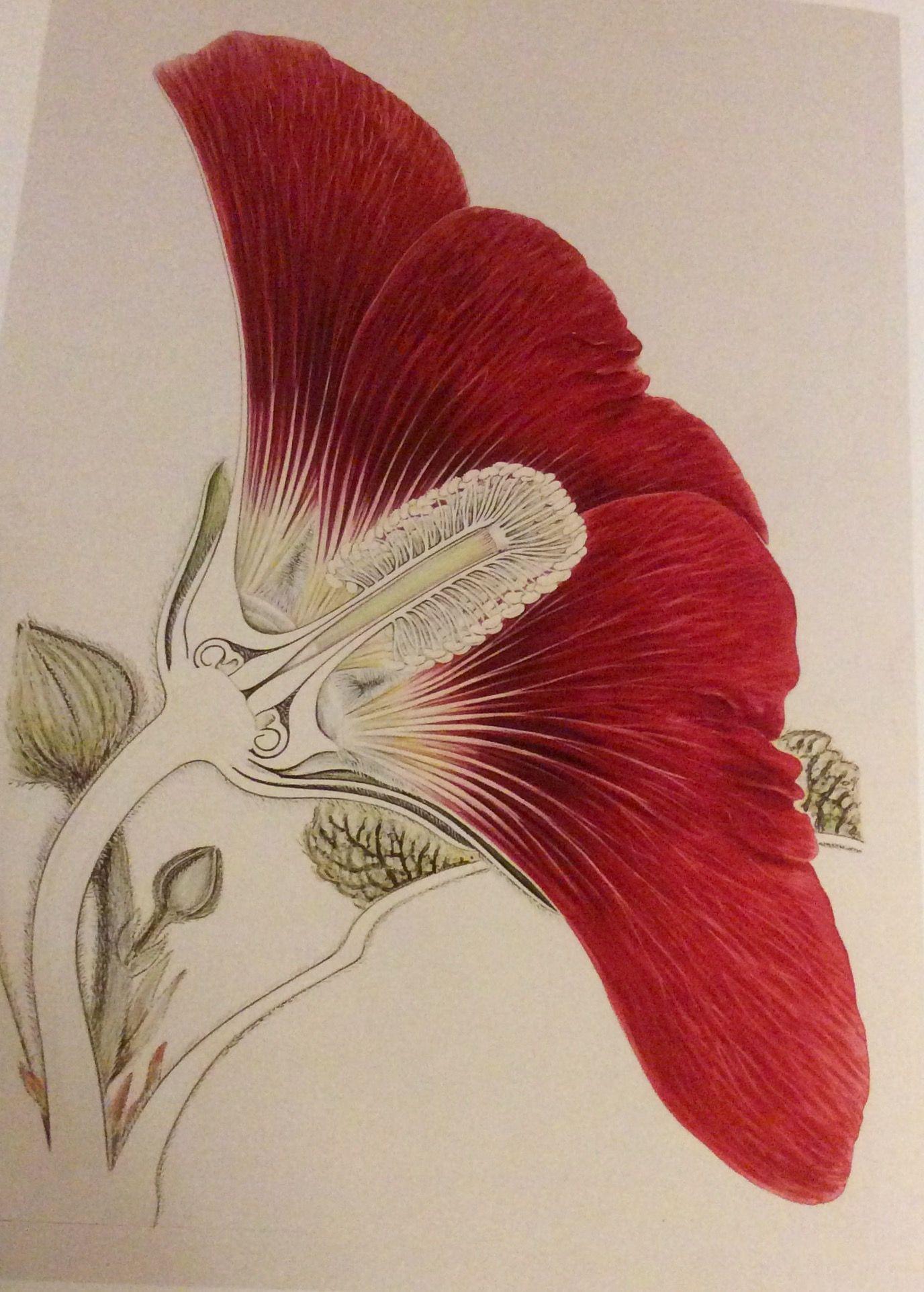 Arthur Harry Church The Anatomy Flowers 1865 1937
