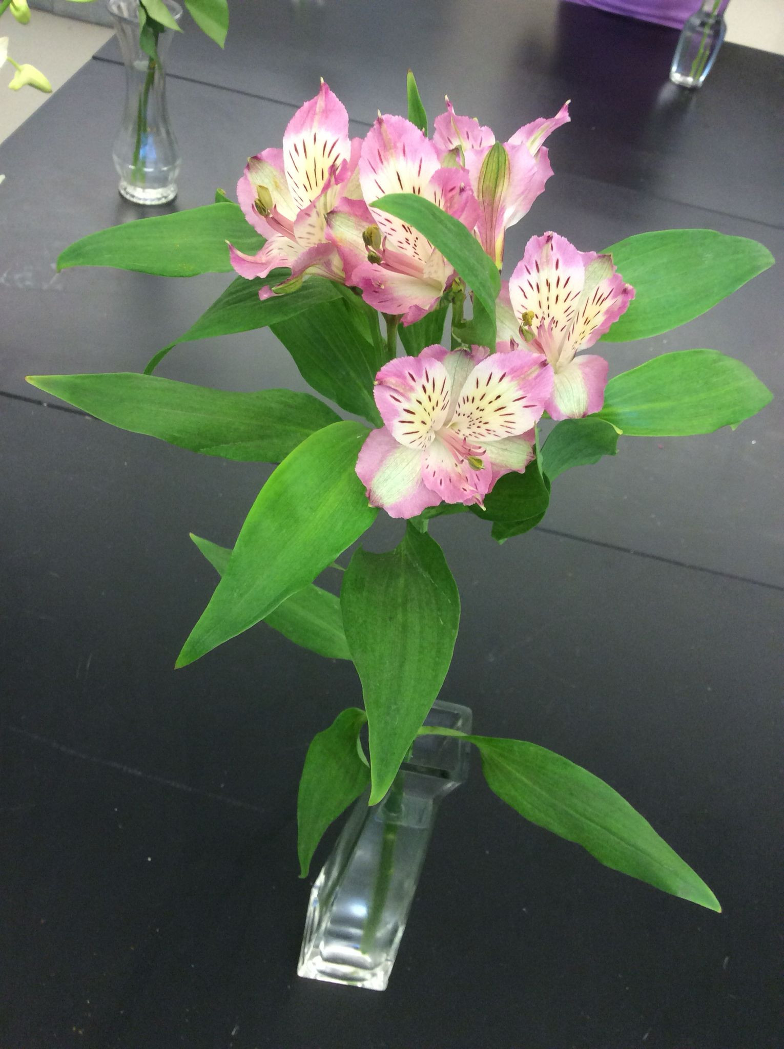 mon name alstroemeria Peruvian lily Inca lily lily of the incas Scientific name alstroemeria Availability year round Description umbel like clusters