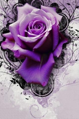 Purple Roses Flowers
