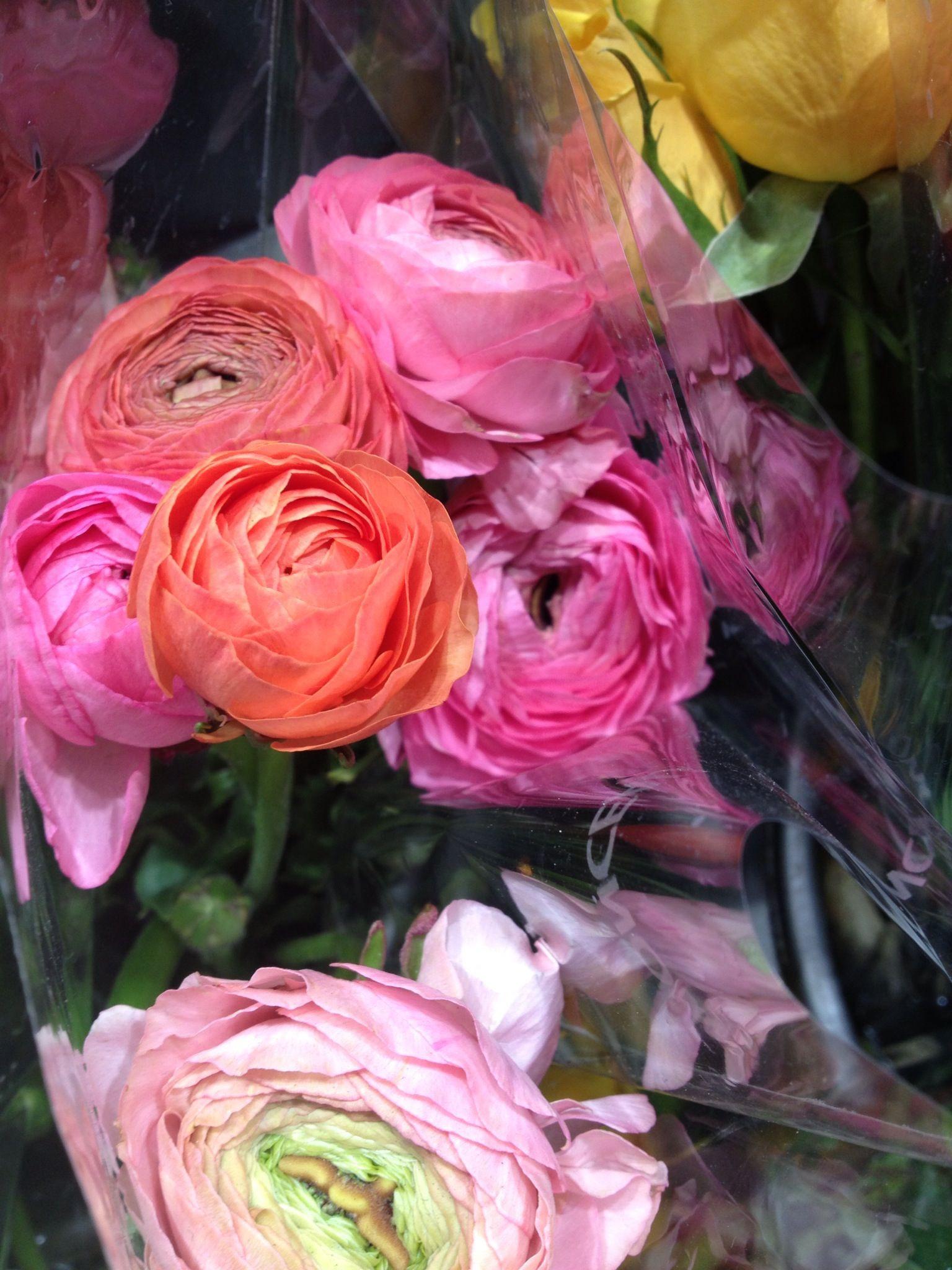 Ranunculus in Paris · Flower ShopsRanunculus