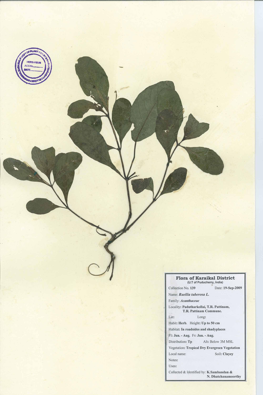 Herbarium Image