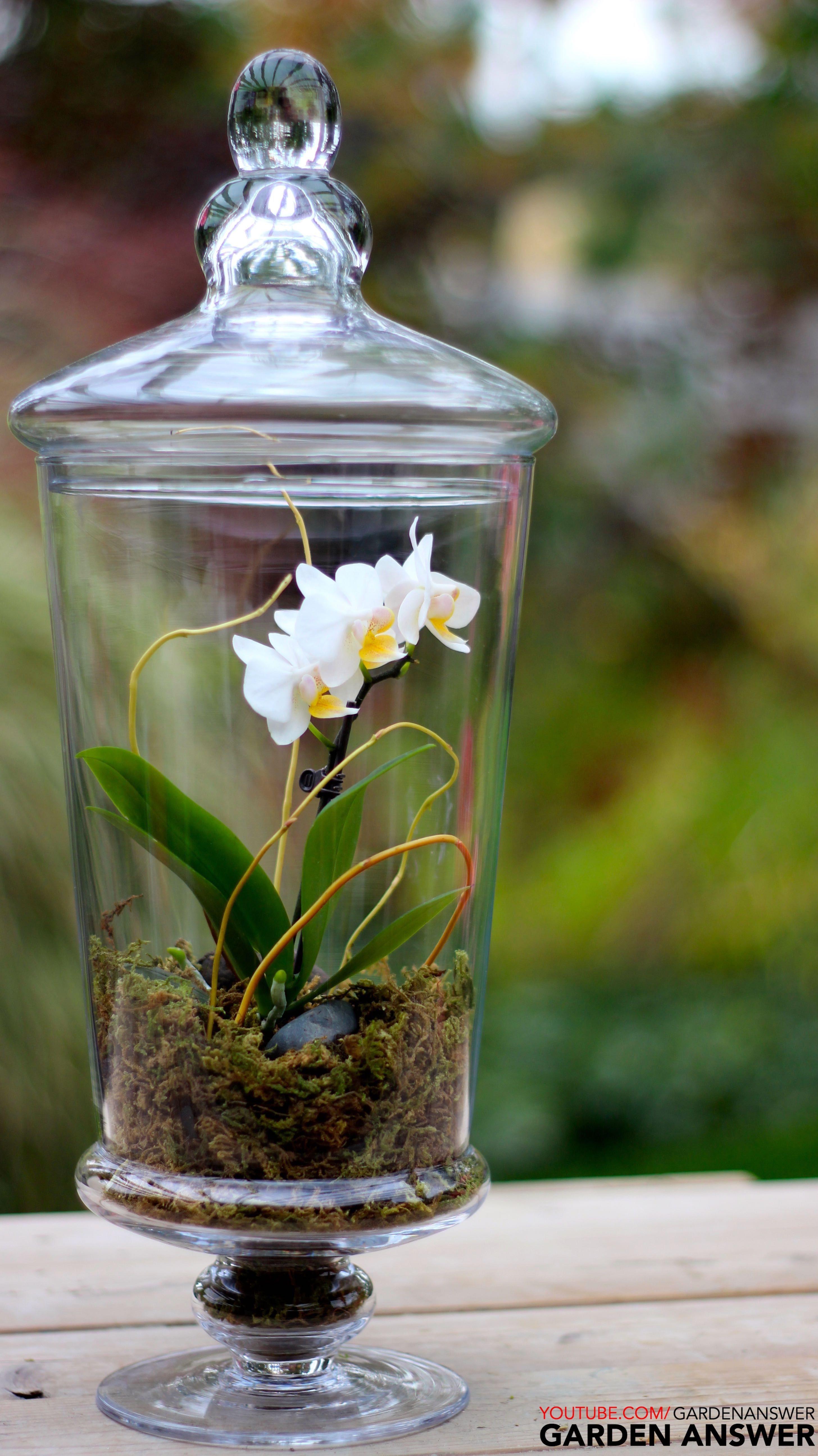 Orchid Terrarium gardenanswer gardenanswer