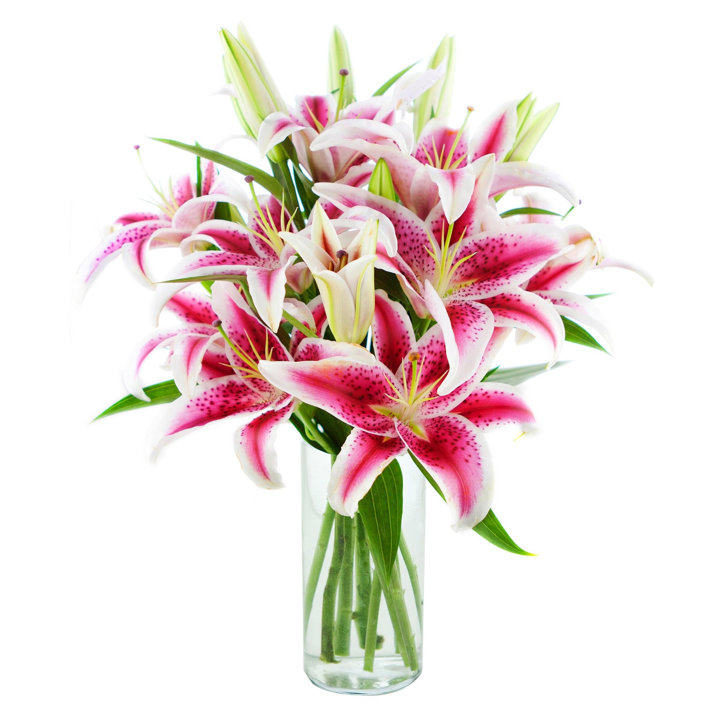 Main 36h Vases Vase Lilies I 0d Vaselines Band Wiki son A Gun Scheme Lilies