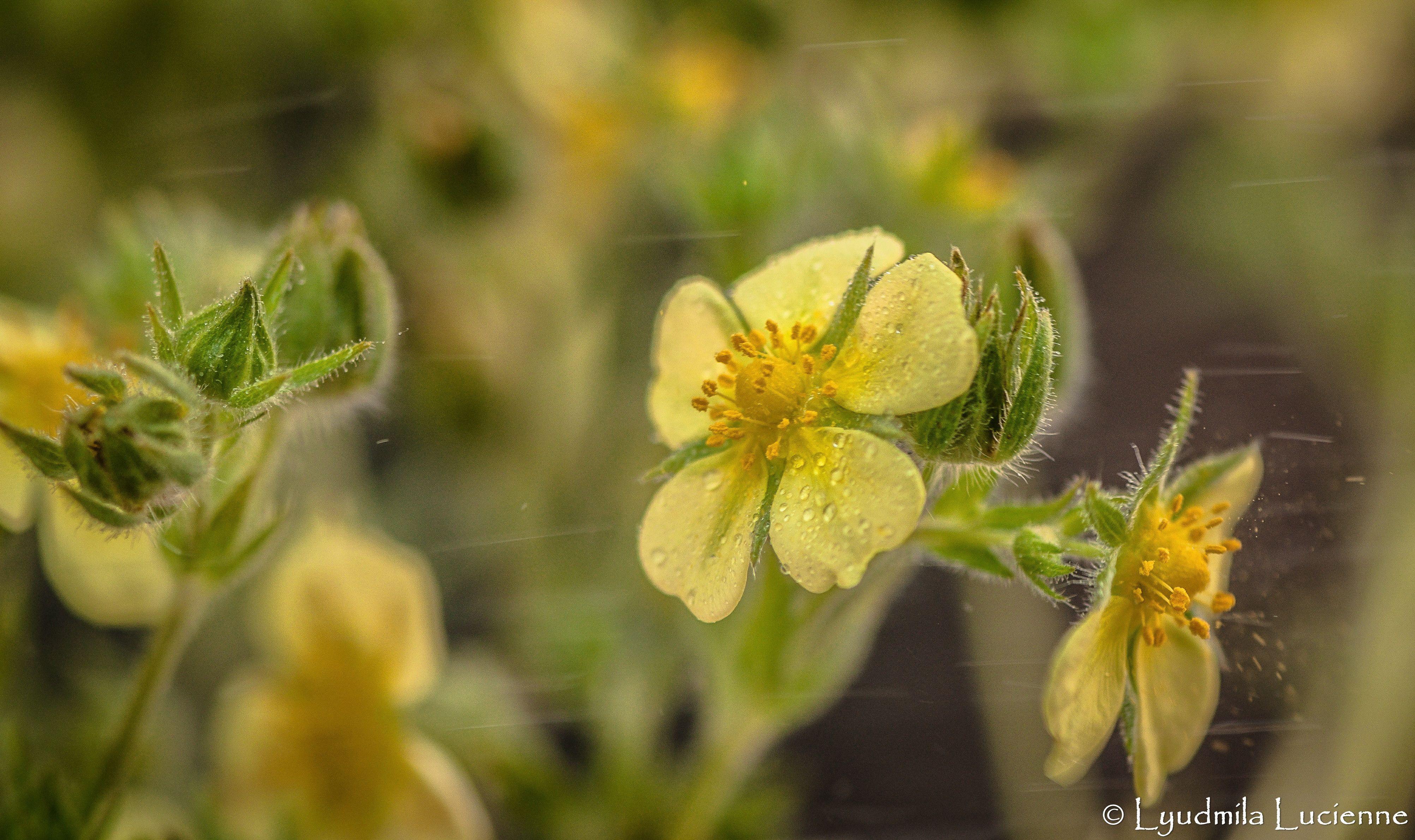originalcontent landscape yellow flowers bright
