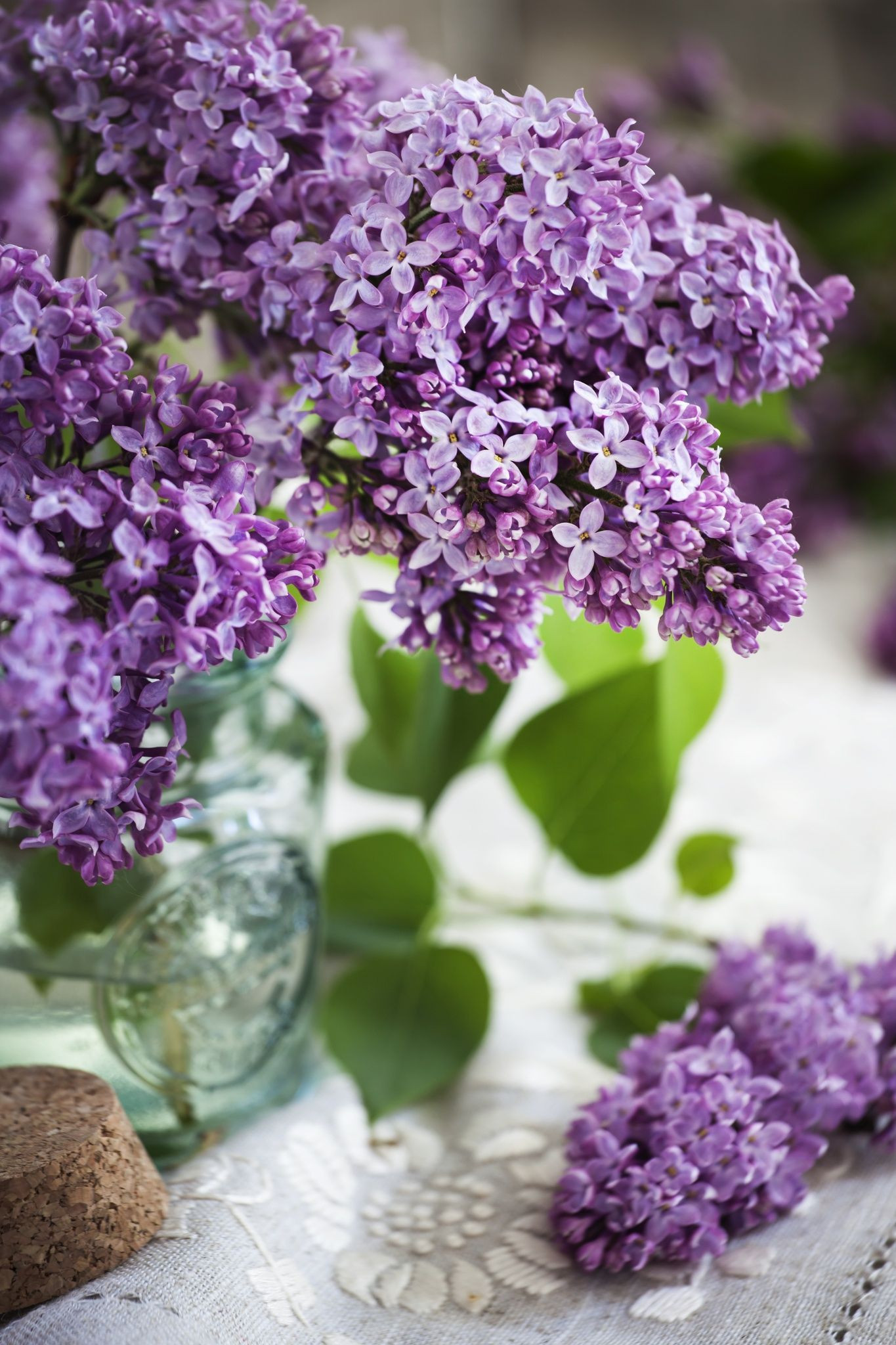 Lilac by Yulia Kotina on 500px