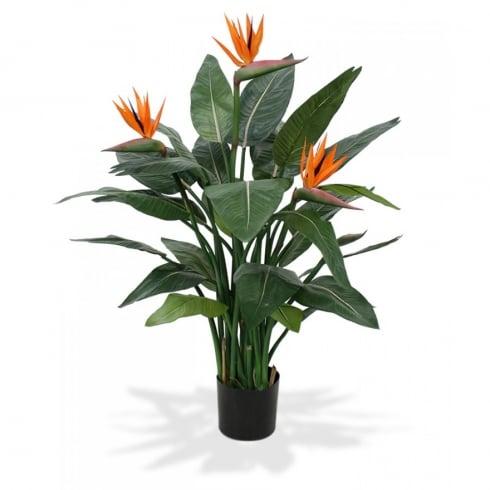 Tropical Plants Flower