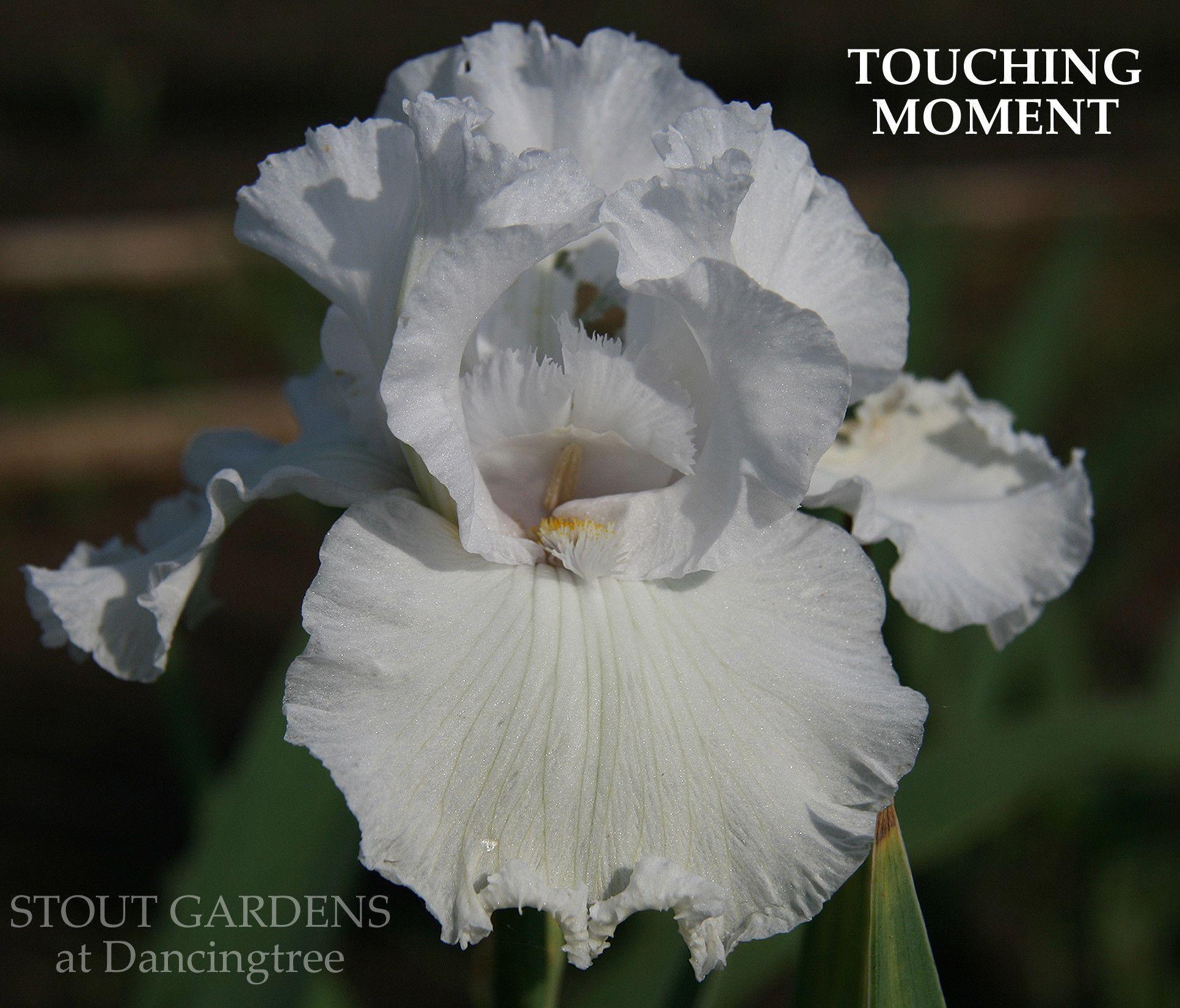 Iris TOUCHING MOMENT